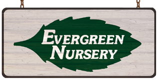 Evergreen Nursery