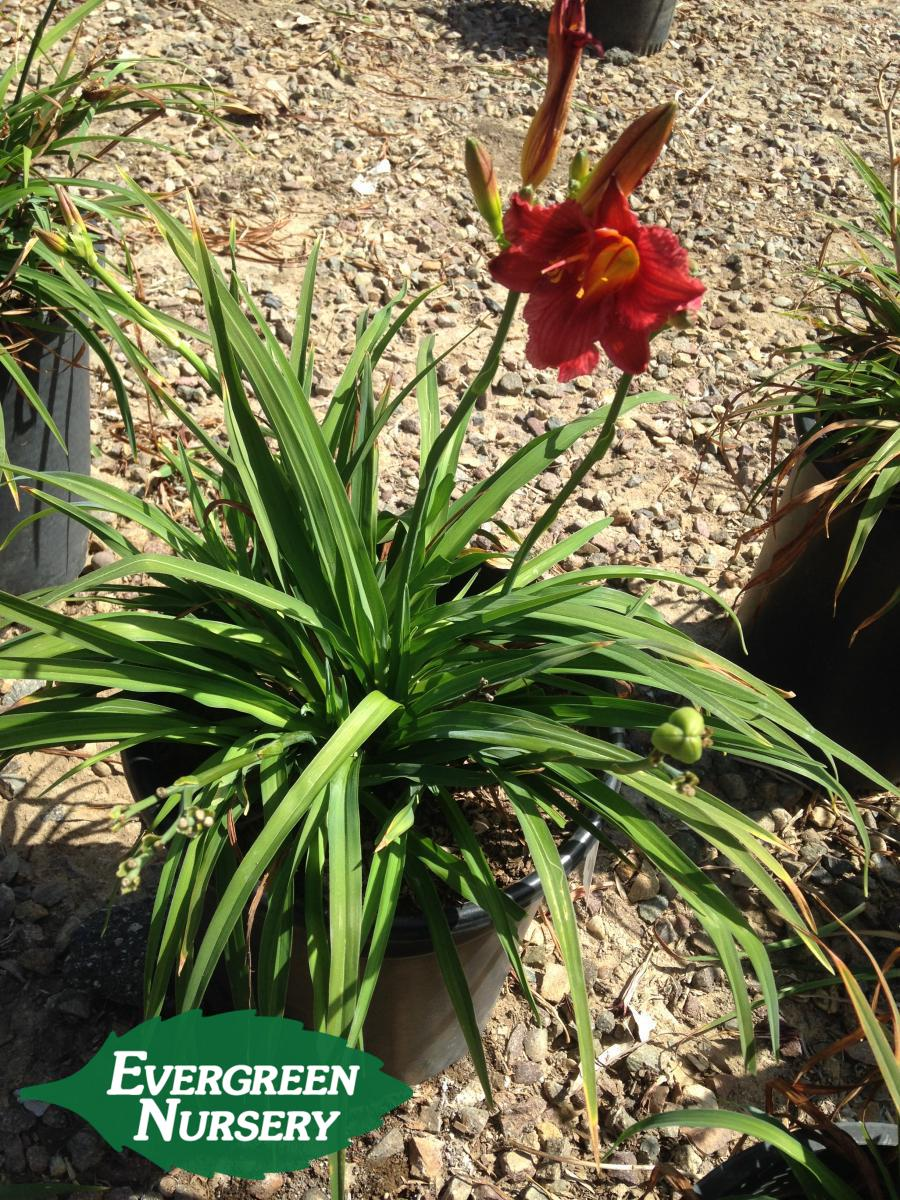 Landscaping with Native Perennials