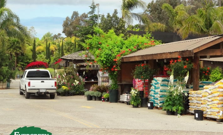 Evergreen Nursery check out