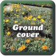 """Ground Cover"""