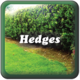 """Hedges"""