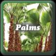 """""""Palms"""""""