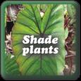 """Shade Plants"""
