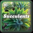 """Succulents"""