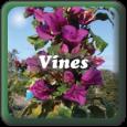"""""""Vines"""""""