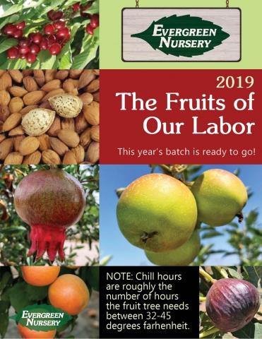 Fruit Varieties Flip Book