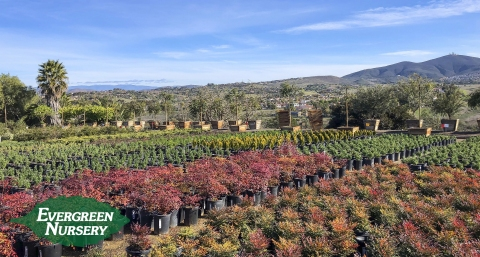 Evergreen Nursery View