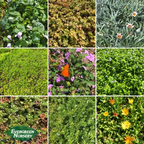 groundcover collage
