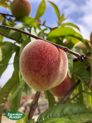 Strawberry Free Peach