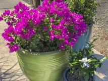 Plants in Colorful Containers