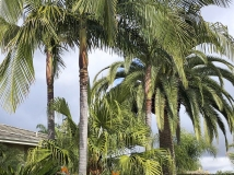 Palm trees in landscape