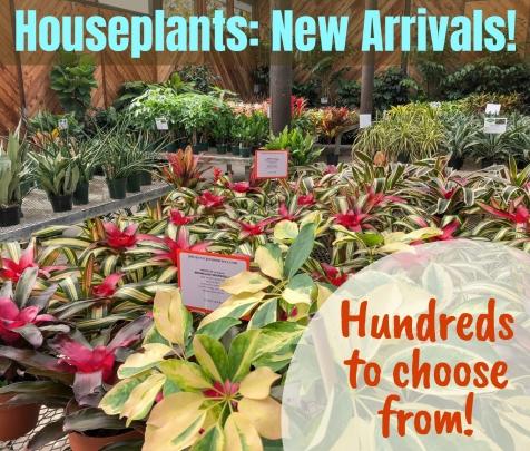 Evergreen Nursery | San Diego's Largest Wholesale Nursery