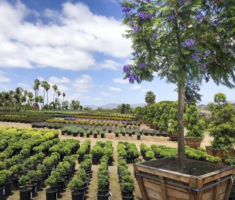Evergreen Nursery | San Diegou0027s Largest Wholesale Nursery Open To The Public