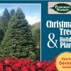 Christmas Trees and Holiday Plants