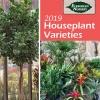 2019 Houseplant Varieties