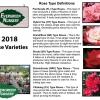 BUY NOW - Evergreen Nursery Roses 2018