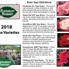 BUY NOW - Evergreen Nursery Roses 2018
